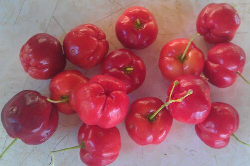פרי אסרולה, acerola