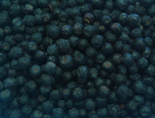 ארוניה, פירות של ארוניה, aronia