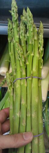 אספרגוס asparagus