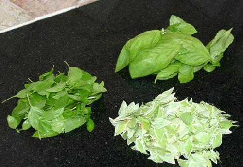 גידול בזיליקום, בזיליקום, basil, צמחי תבלין
