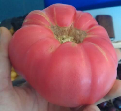 עגבניית ביף-סטייק, beefsteak tomato