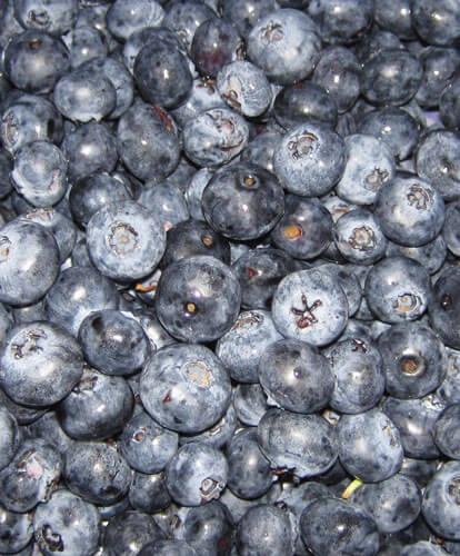 אוכמניות, blueberry