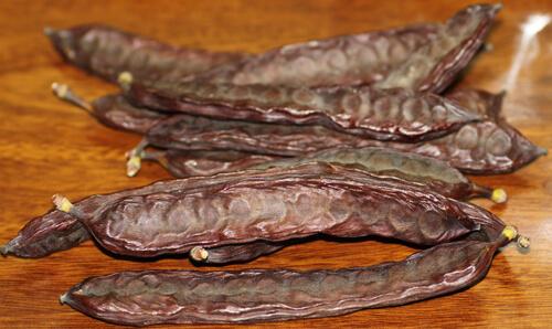 carob, חרוב, חרובים