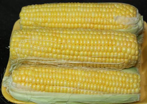 תירס, קלחי תירס, corn