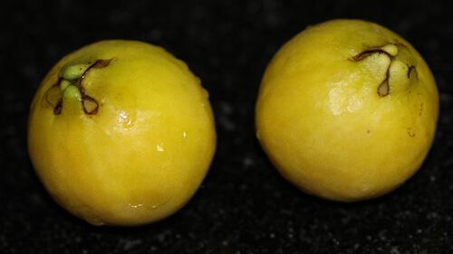 פרי של גויאבה לימונית, גויאבה לימונית, lemon guava