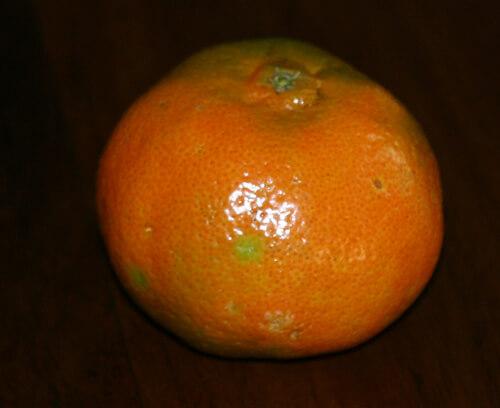 פרי מנדרינה