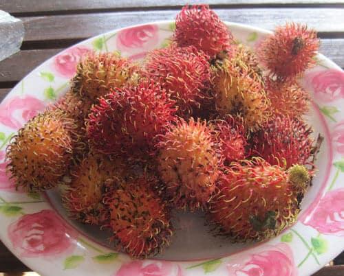 פירות רמבוטן