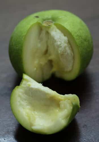 פרי ספוטה לבנה