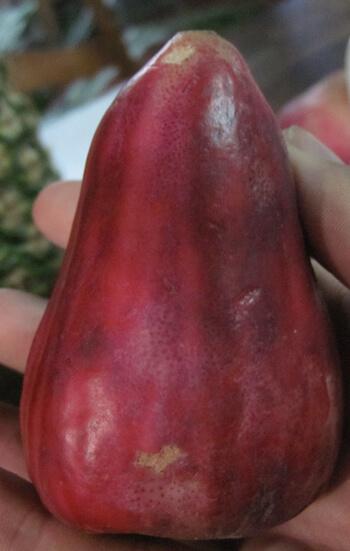 תפוח מלאי